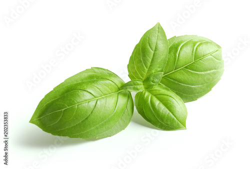 Fotografiet fresh green basil leaves