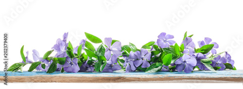 Photo Spring flowers Periwinkle on old wooden board