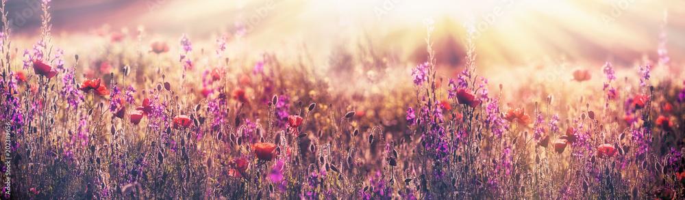 Flowering poppy flower - beautiful poppy flower and purple flower