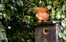 A Squirrel On A Birdhouse