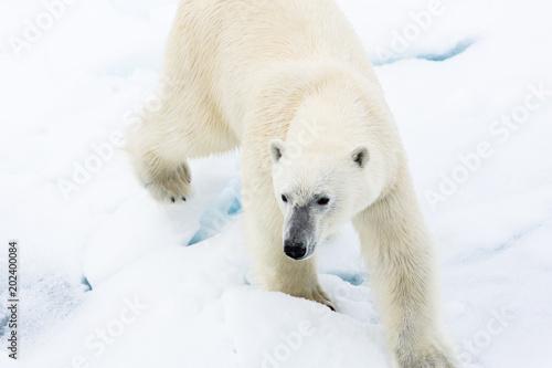 Staande foto Ijsbeer Eisbär, Spitzbergen, Norwegen, Packeis, Nordpol, Wasser, Eisberg
