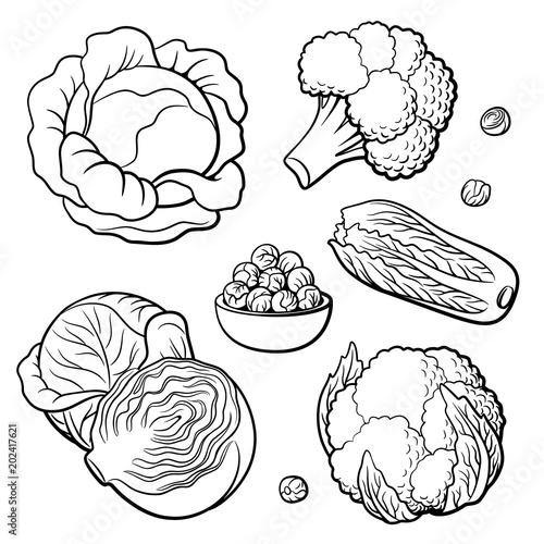 Vászonkép Outline hand drawn set of vegetables
