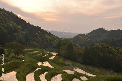 Staande foto Rijstvelden Terraced Rice Fields in the Morning