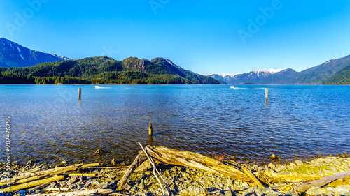 Keuken foto achterwand Meer / Vijver Driftwood on the shores of Pitt Lake with the Snow Capped Peaks of the Golden Ears, Tingle Peak and other Mountain Peaks of the Coast Mountain Range in the Fraser Valley of British Columbia, Canada
