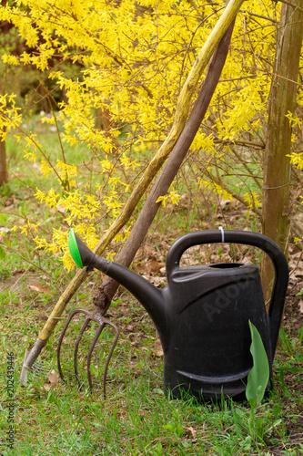 Fototapeta Konewka, widły i grabie w ogrodzie. Narzędzia ogrodnicze. obraz