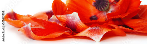 Poster Poppy Red poppy petals on a white background.