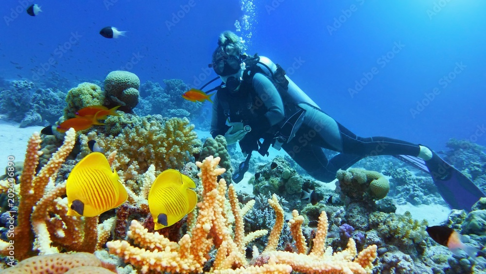 Fototapeta Beautiful coral reef with yellow coral fish, woman scuba diver on the background