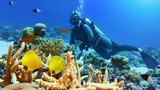 Beautiful coral reef with yellow coral fish, woman scuba diver on the background