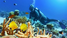 Beautiful Coral Reef With Yell...