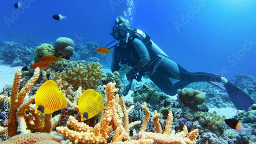 Beautiful coral reef with yellow coral fish, woman scuba diver on the background Wallpaper Mural