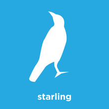 Starling Icon Isolated On Blue Background