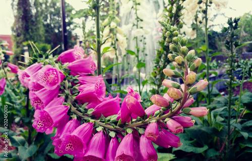 Garden Poster Foxglove Flowers