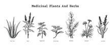 Medicinal Plants And Herbs Han...