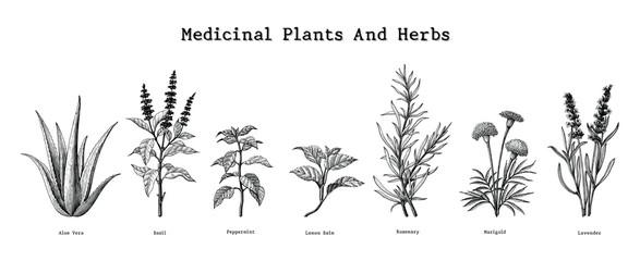 Medicinal plants and herbs hand drawing vintage engraving illustration