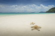 Starfish on beautiful tropical beach background with horizon blue sky and white sand.