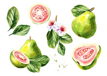 Pink Guava Fruits Composition ...