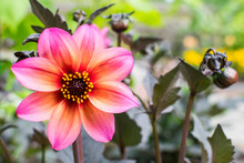 Pink And Orange Bloom 3