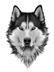 Panel Szklany Pies Illustration portrait of siberian husky, blue eyes, hair and mane, confident dog, militant look. Hand drawing.