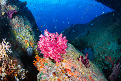 Papiers peints Recifs coralliens Tropical fish and colorful corals on a coral reef