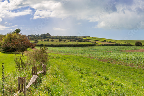 Tuinposter Bleke violet A South Downs Landscape