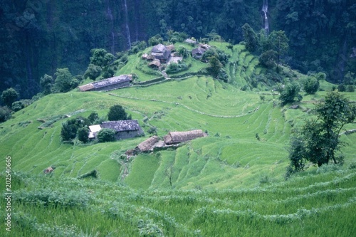 Tuinposter Olijf Nepal, tra templi, paesaggi e colori