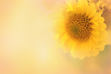 A Soft Focus Yellow Flower Wit...