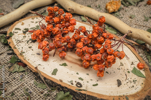 Fotografie, Obraz  Herbal medicine concept. Dry rowanberry on sackcloth background.