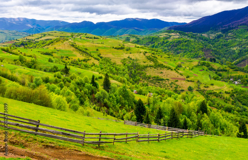 Aluminium Prints Rice fields wooden fence along the grassy hillside. beautiful springtime landscape of Carpathian mountains on a cloudy day.