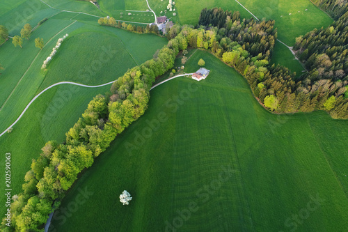 Tree row and farm from the bird's eye view in the rich spring green in central Switzerland