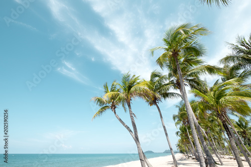Zdjęcie XXL Vintage tropikalnej plaży (pejzaż morski) z palmą w lecie. Krajobraz wybrzeża. efekt vintage, odcień koloru.