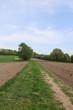 Ackerland im Frühjahr