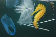 Plastic Pollution In Ocean. Se...