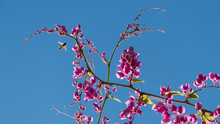 Beautiful Pink Creeper Against A Blue Sky Background