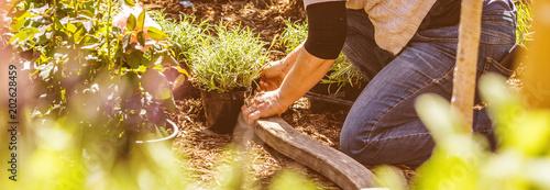 Poster Jardin Frau im Garten pflanzt blumen ein (gartenarbeit)
