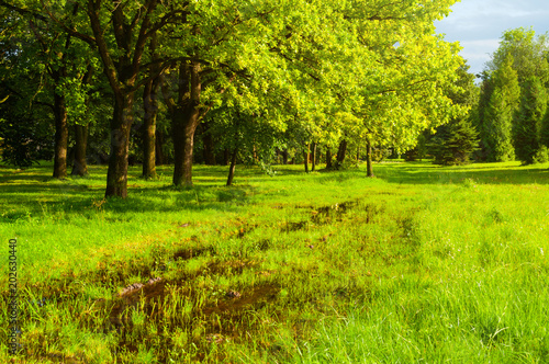 In de dag Lime groen Spring landscape. Green trees and flooded spring lawn in the park in sunny day