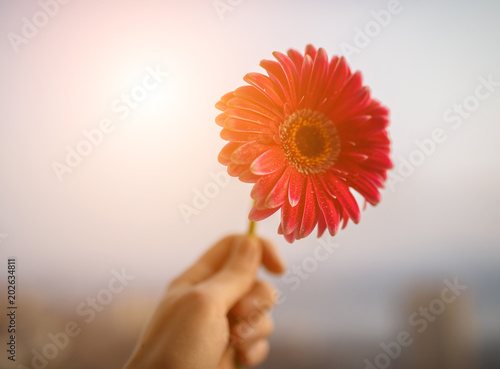 Tuinposter Gerbera Gerbera on sky background. Shallow depth of field.