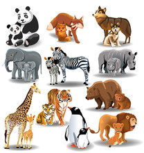 Wild Animals And Their Babies