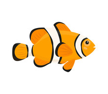 Cute Clown Fish On White Backg...