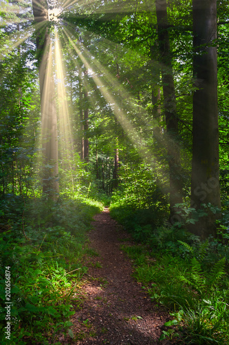 Wall Murals Forest Forest path with sunshine
