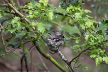 Annas Hummingbird Chicks