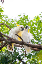 Love Of Bird