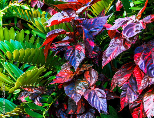Garden Poster Bird-of-Paradise Succulent plants with vibrant colors in subtropical climate