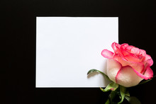 Flower Bud Of Rose In Black Background With Place For Text On White Sheet Close-up, Decor Of Layout For Holiday, Flat View From Above