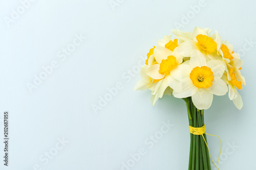 Deurstickers Narcis Spring flowers daffodil bouquet - top view of white narcissus on blue pastel background with copy space.