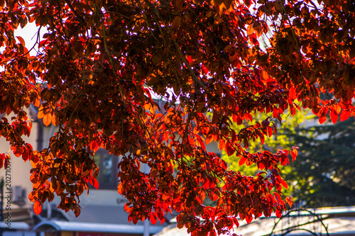 Poster Chocoladebruin Colorful branches of tree