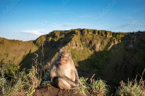 In de dag Aap monkey sitting on a volcano