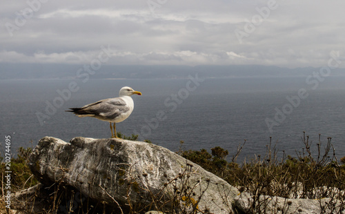 Poster Nature Seagull on Rock