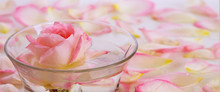 Pink Rose In A Bowl Of Water A...