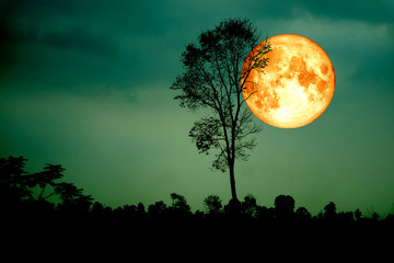 super full blood moon back silhouette branch tree dark green sky