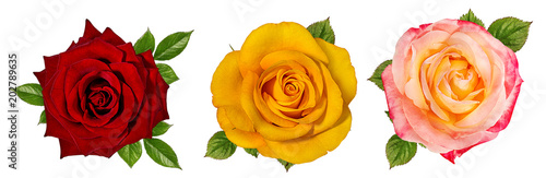 Tuinposter Roses rose isolated on white background